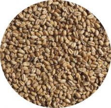 Солод ячменный «Мюнхенский», 1 кг