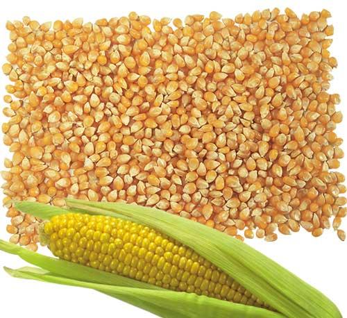 Кукуруза для самогона, 1 кг